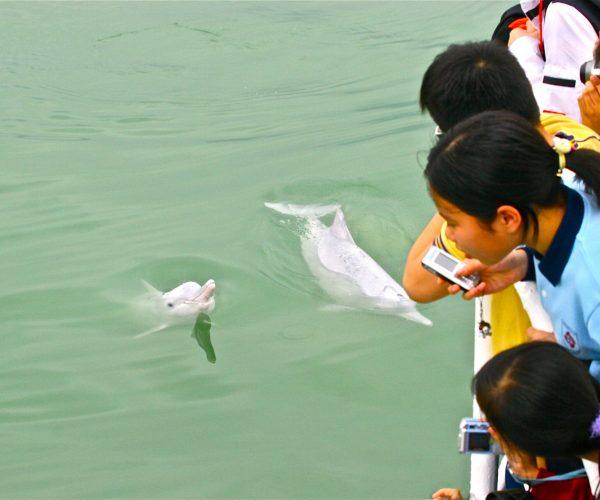 20060407_Dolphin_by_海豚哥哥Thomas_0515
